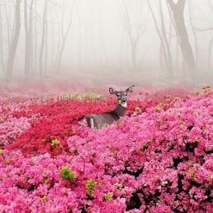 Олень в розовом цвете